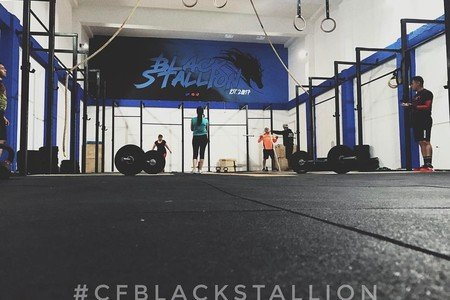 CF Black Stallion -