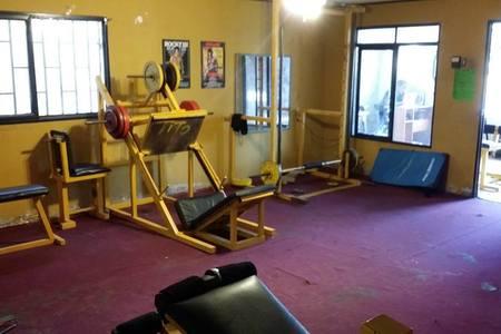 Pit Bull Gym -